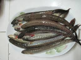 Cá kèo được người Việt Nam ưa chuộng